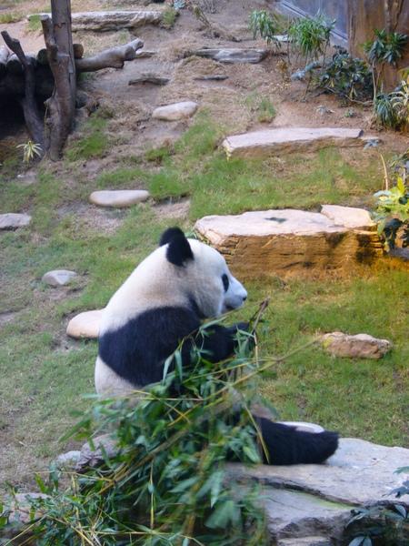貓熊也餓囉
