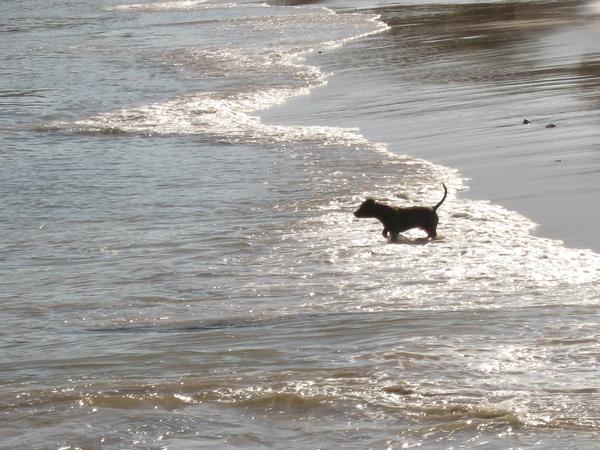 陽光在海面上閃閃發亮~~汪將在海邊踏浪玩球~
