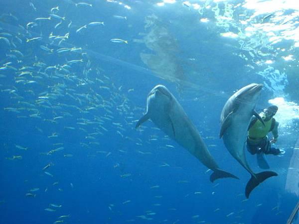 第二次拜訪八景島~新的海豚館