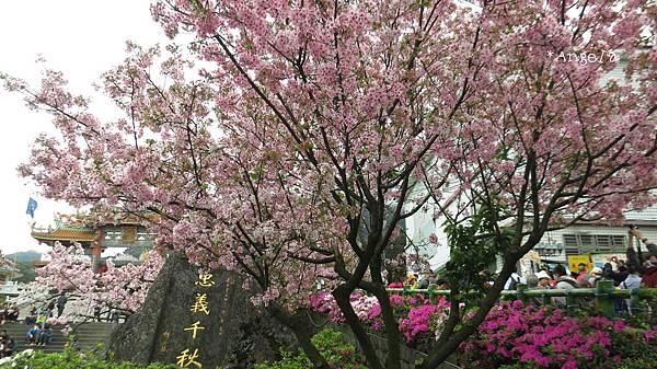 牌樓前的櫻花.jpg