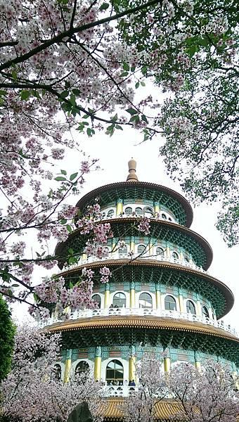 櫻花與天元宮.jpg