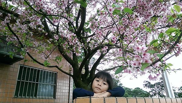 櫻花樹下的彤.jpg