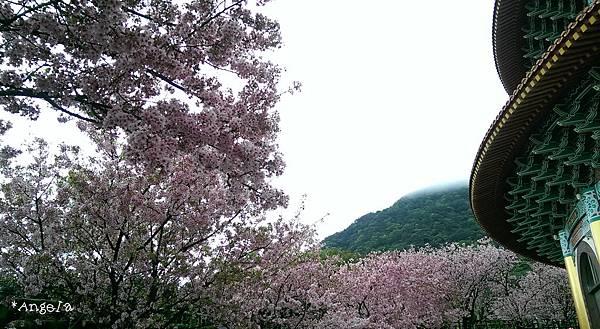 天元宮右側的花海.jpg