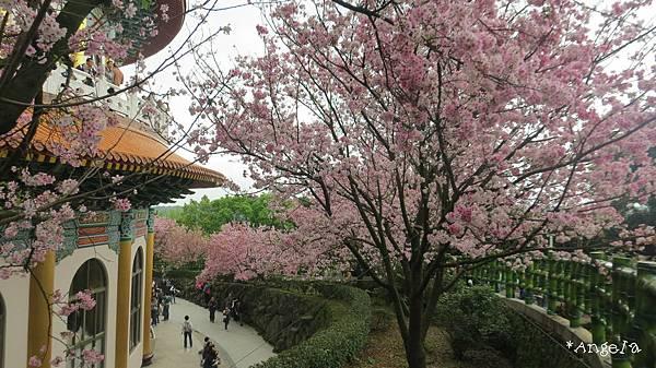 天元宮左側的花海.jpg