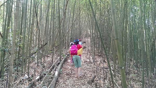 20竹林探險.jpg