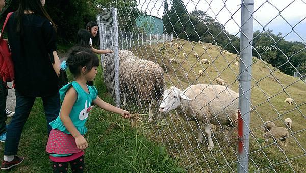 餵羊-1.jpg