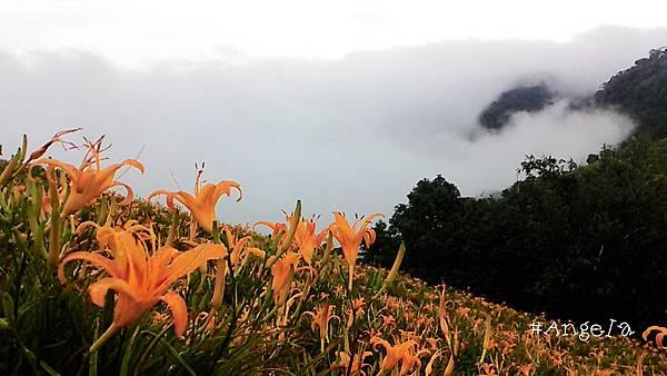 濃霧來襲.jpg