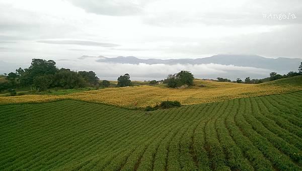 富茂農場看出去的山景.jpg