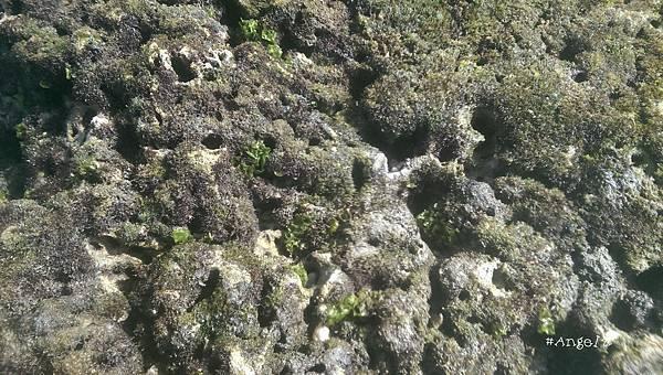 礁石.jpg