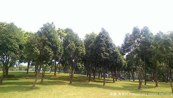 B區樹林.jpg
