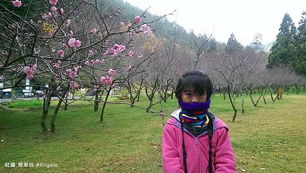 櫻花-.jpg