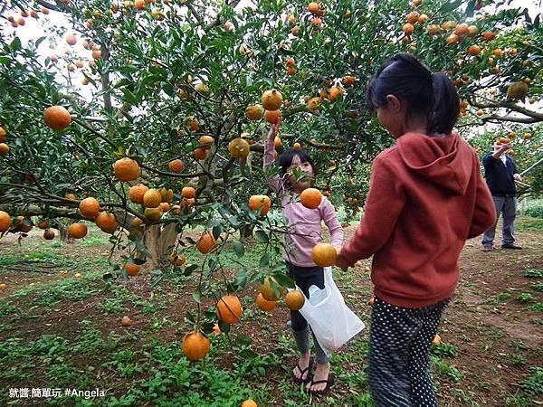 摘橘子1.jpg
