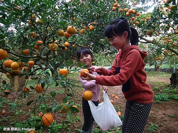 摘橘子.jpg