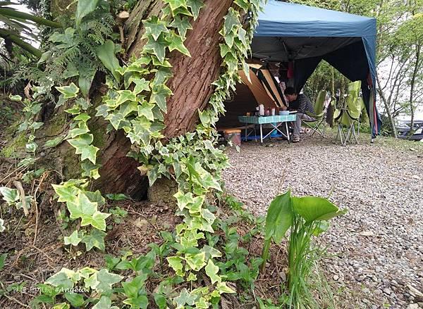 木村的家爬藤植物.jpg