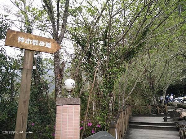 拉拉山自然保護區-往神木步道.jpg