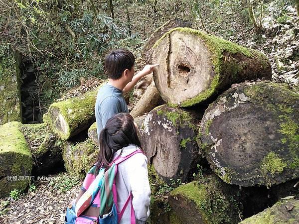 拉拉山自然保護區-年輪教學.jpg
