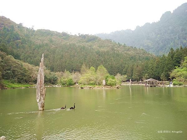 明池森林遊樂園.jpg