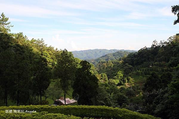 E區 森林步道看下去的風景.JPG