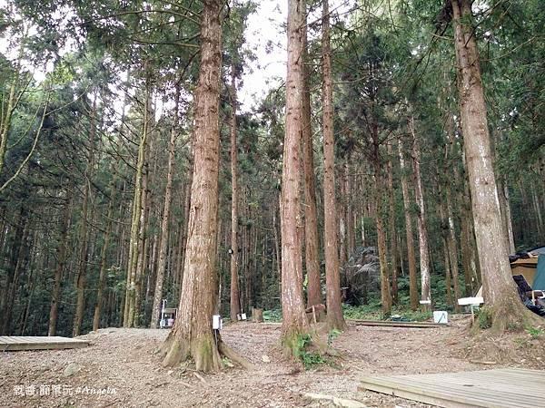 森林區.jpg
