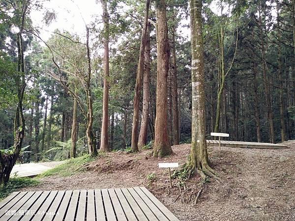森林區1.jpg