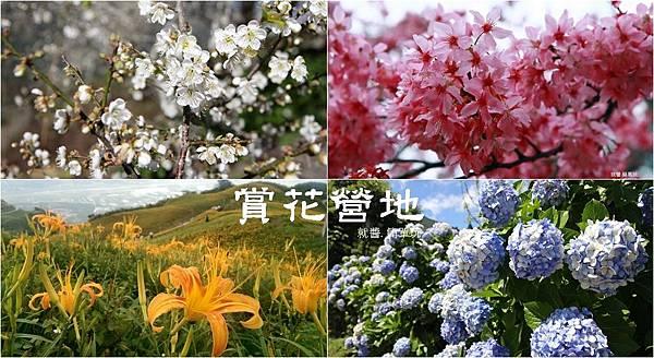 賞花營地.jpg