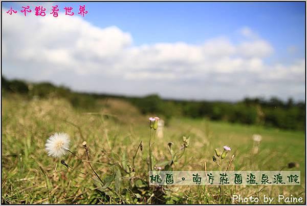 _MG_9323.jpg