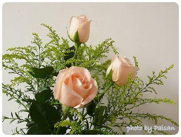 三朵香檳玫瑰