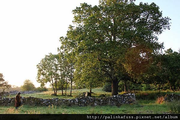 yo oak.jpg