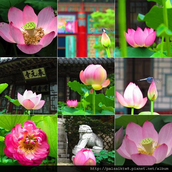 蓮花文化節