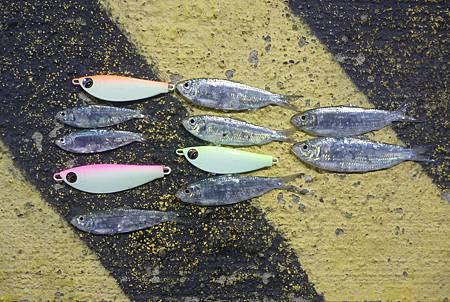 鯡的設計概念來自於大型掠食魚類的食物.JPG