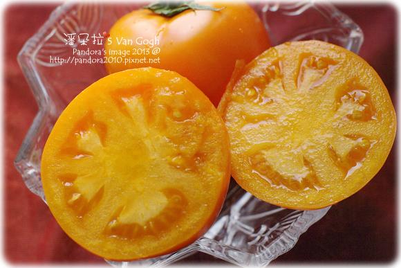 2013.02.03-(自家莊園)黃金大番茄