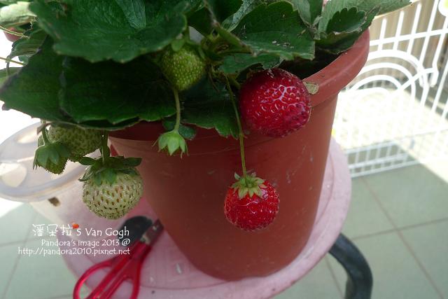 2013.02.17-小草莓n1、n2