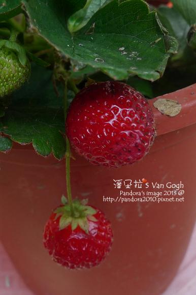 2013.02.17-小草莓n1、n2-