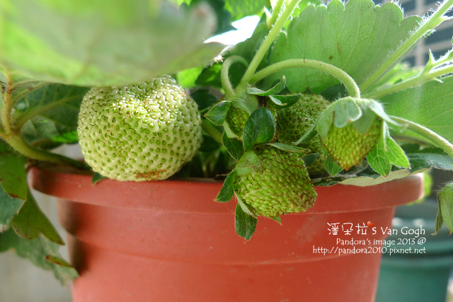 2013.02.17-小草莓n5