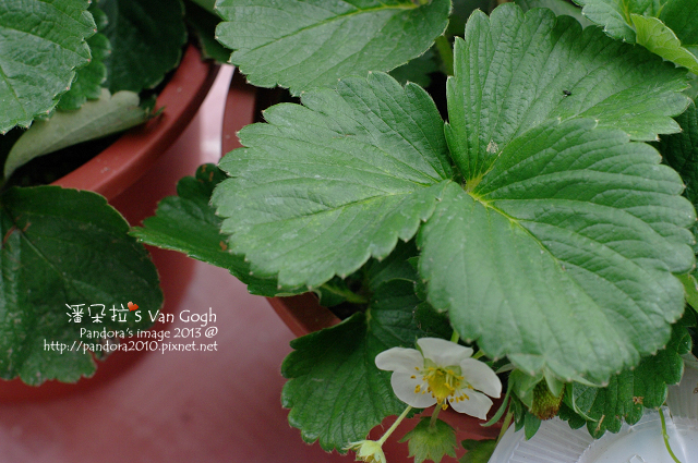2013.02.20-小草莓-