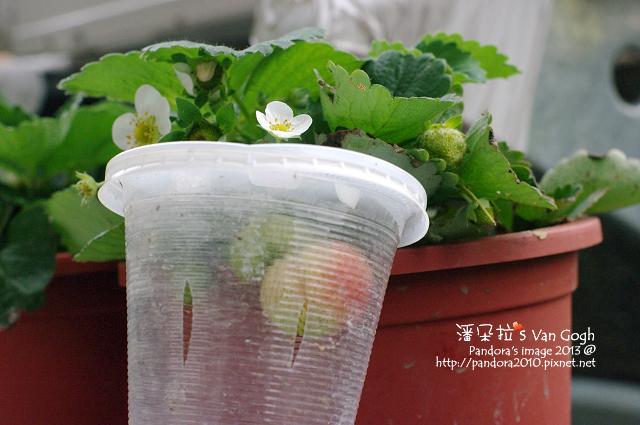 2013.02.20-小草莓n4