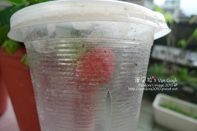 2013.02.22-小草莓n4