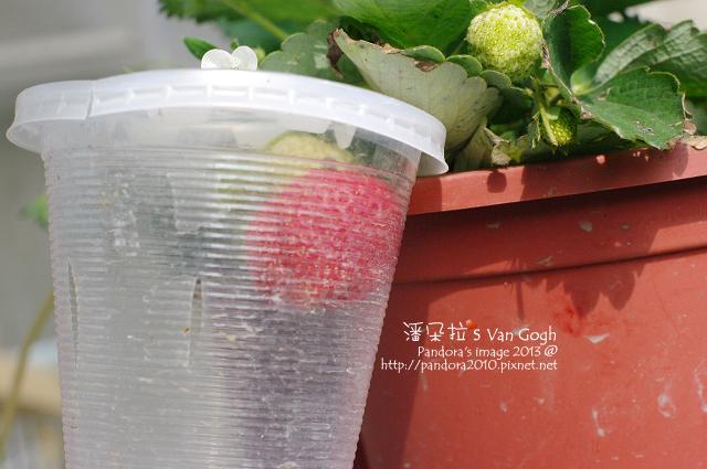 2013.02.23-小草莓n4