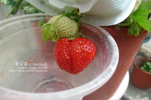 2013.02.24-小草莓n4