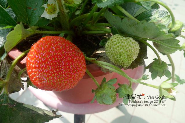 2013.02.24-小草莓n5、n7