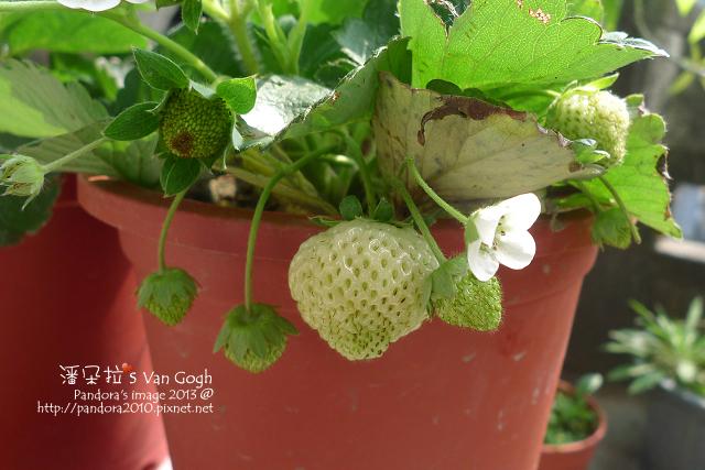 2013.02.24-小草莓n6