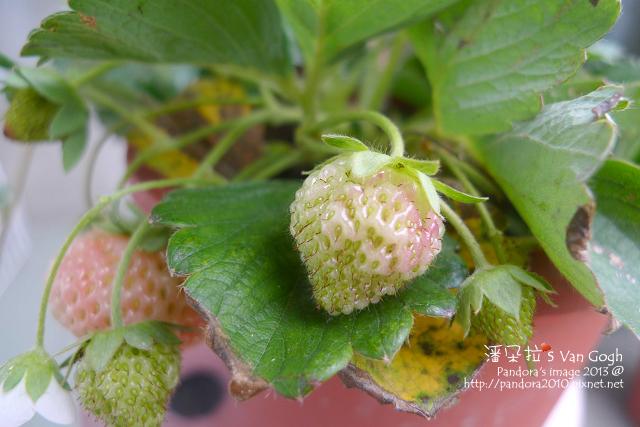 2013.02.25-小草莓n8