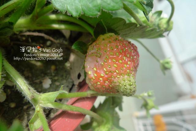 2013.02.26-小草莓n7