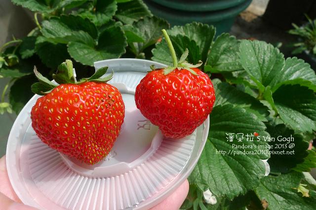 2013.02.24-小草莓n4、n5