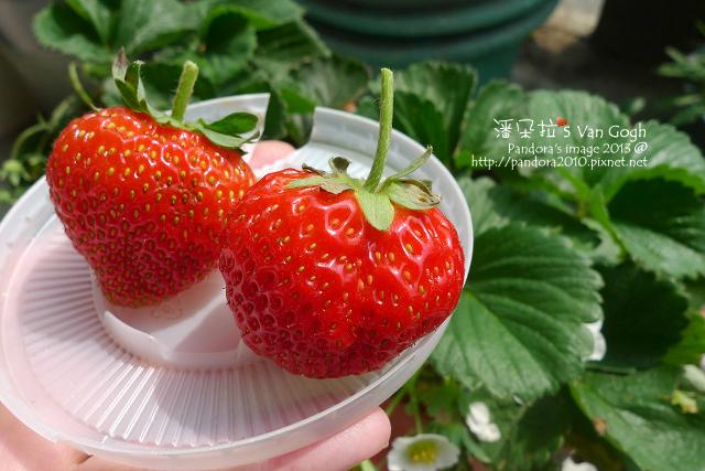 2013.02.24-小草莓n4、n5-2
