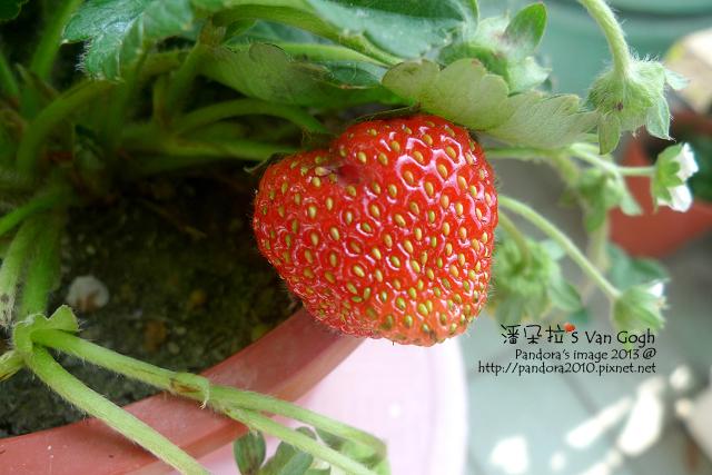 2013.02.28-小草莓n7