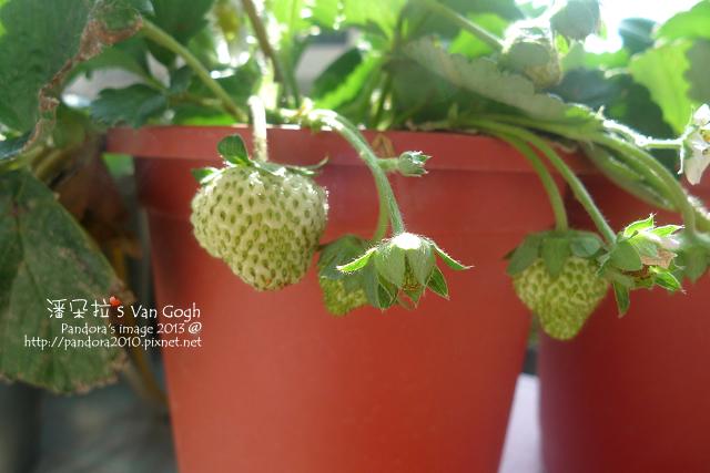 2013.02.28-小草莓n9