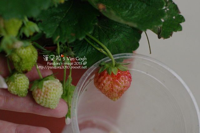2013.03.01-小草莓n8