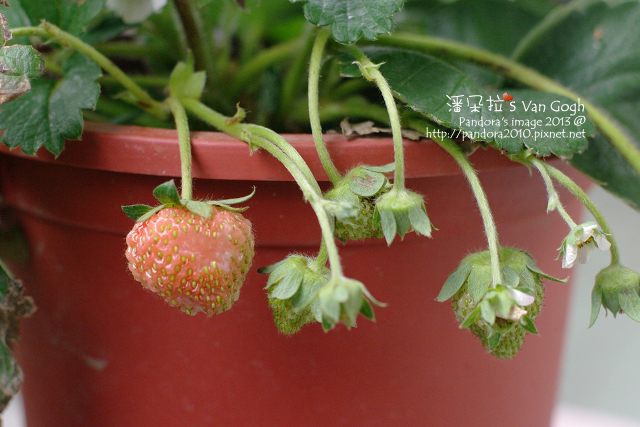 2013.03.01-小草莓n9