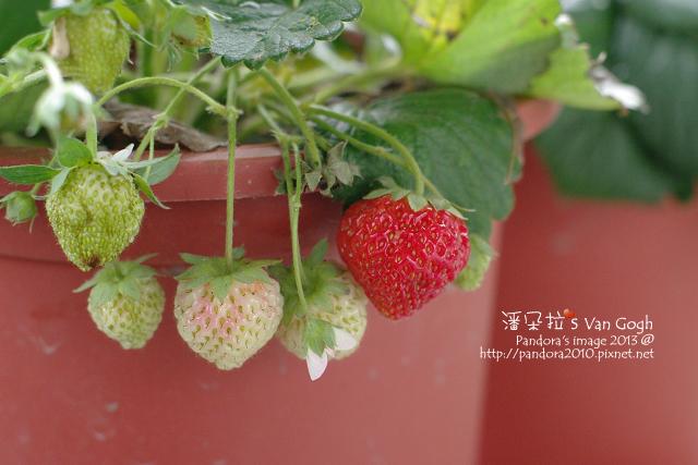 2013.03.03-小草莓n8